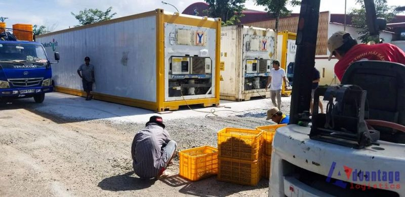 Nhiệt Độ Bảo Quản Hàng Nông Sản, Trái Cây Trong Container Lạnh