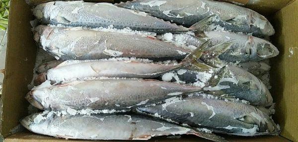 Thủ Tục Nhập Khẩu Cá Đông Lạnh