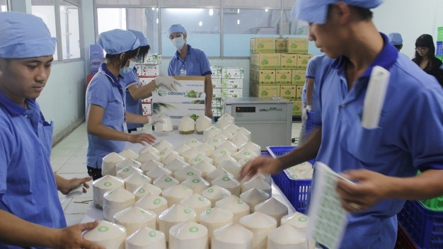thủ tục xuất khẩu dừa tươi