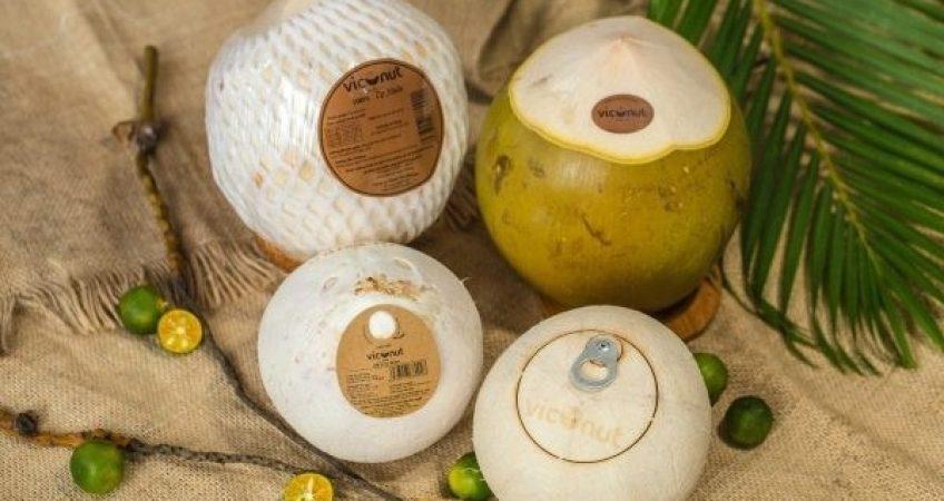 Thủ tục xuất khẩu các mặt hàng dừa tươi