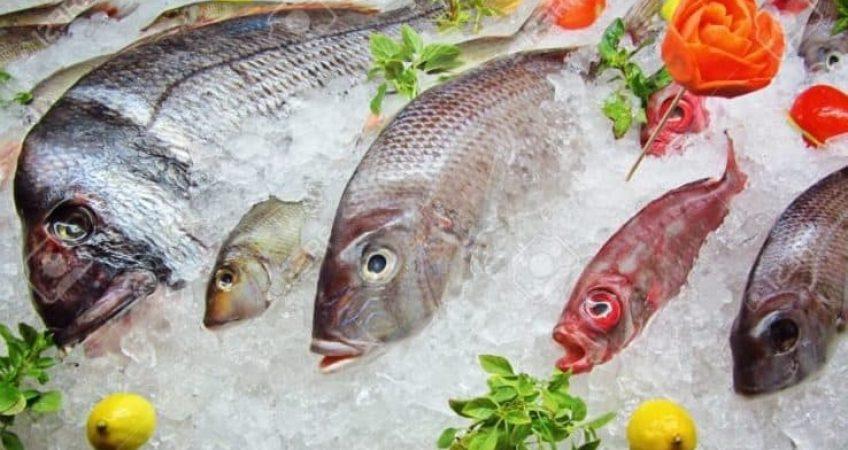 thủ tục nhập khẩu cá mực đông lạnh về Việt Nam